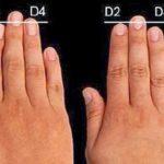 Гадание по длине пальцев на совместимость с партнером – хиромантия