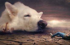Сонник собака – приснилась во сне