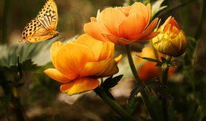 Сонник сломанная сережка (серьга) – сбывшийся сон